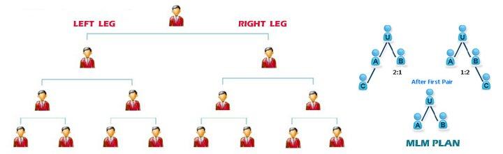 MLM Website Development company in Bhubaneswar